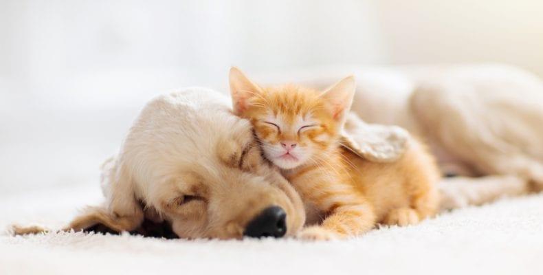 Divorce: cat and dog sleeping